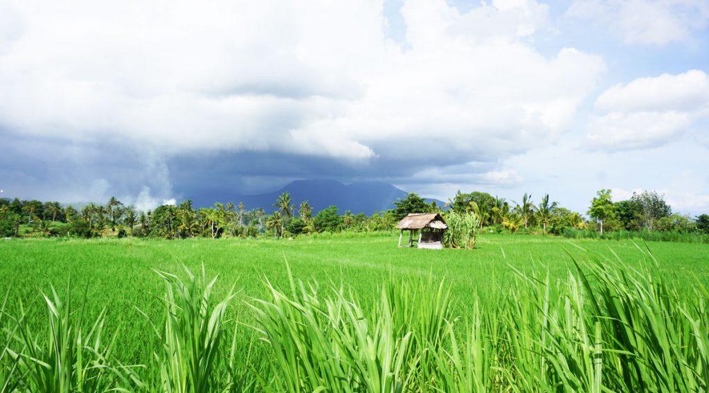 Ruộng lúa Sidemen trên đường đi